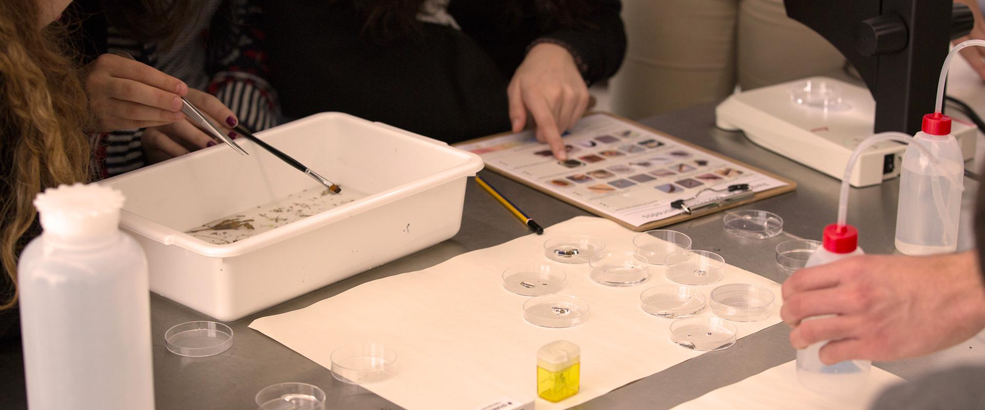 """Macroinvertebrados: """"Bioindicadores da qualidade da água"""""""