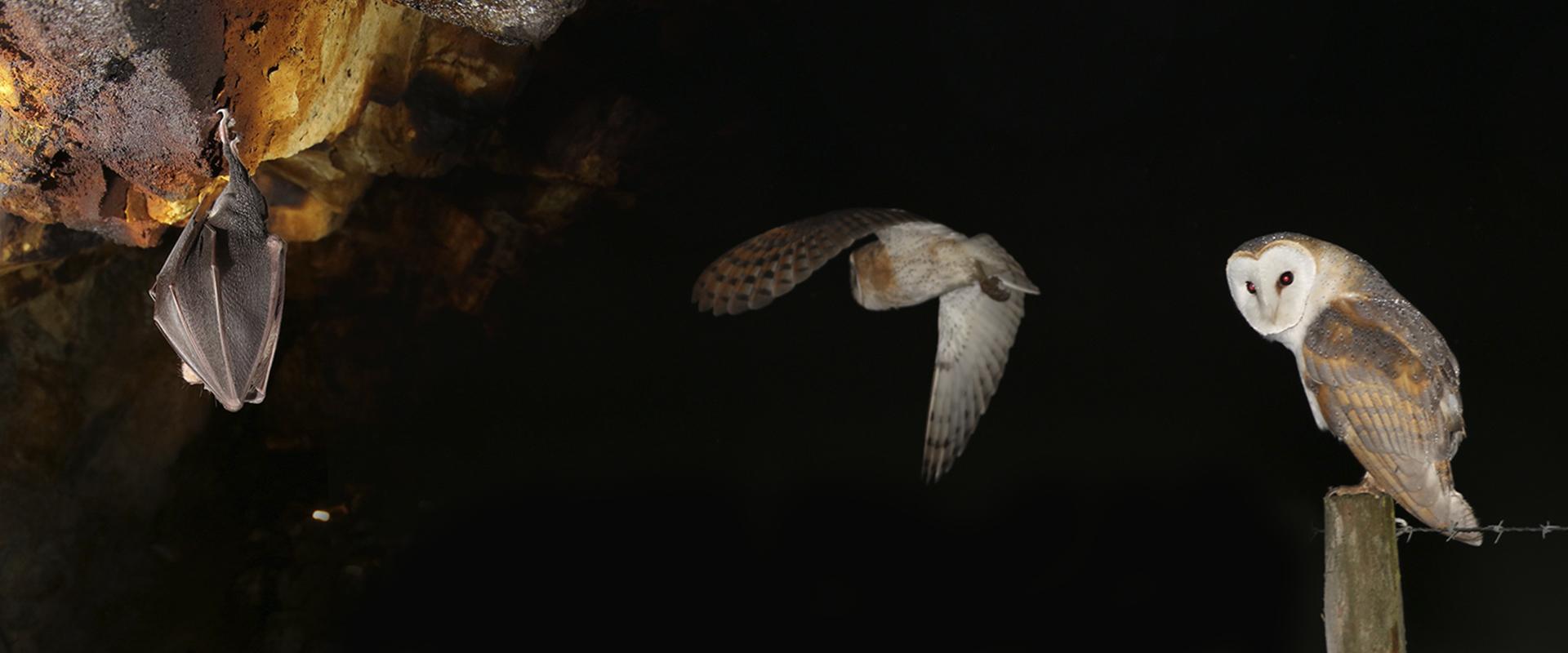 Observação de Aves Noturnas e Morcegos