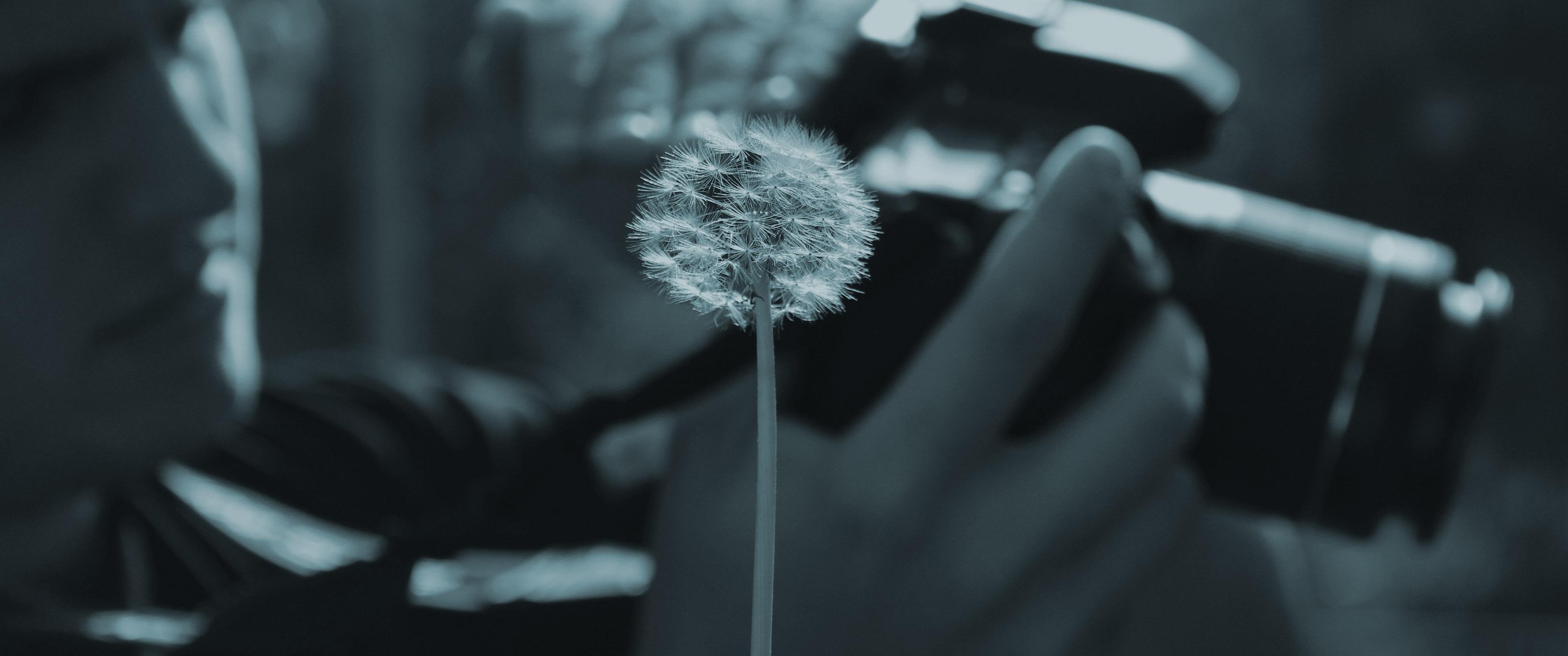 Curso Juvenil de Fotografia de Natureza